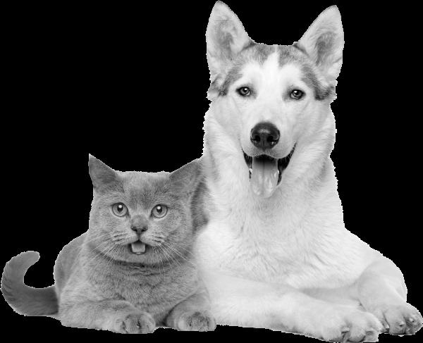 Gato y perro agazapados img